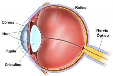 presbicia-anatomia-ocular-e1434536571677